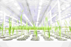 Greenhouse_factory_bioeffect-compressed